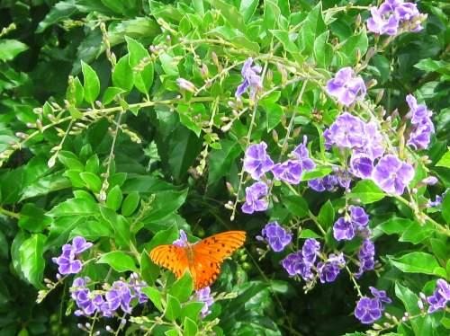 Finalmente, a Natureza que explode em beleza e cores ao nosso redor.
