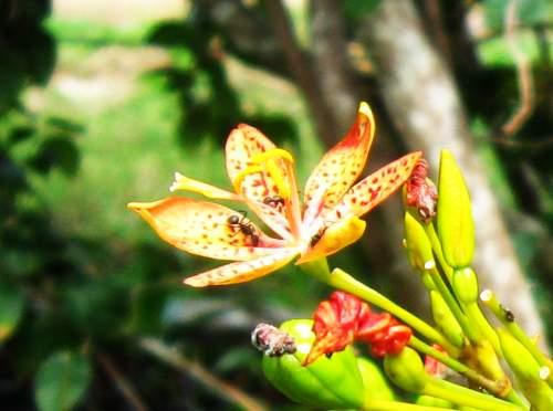 Perfeita paz entre insetos e flores.