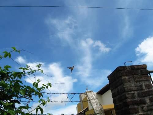 E o beija-flor, gulosinho, empanturrado de mel, ainda consegue ficar soltinho no ar!