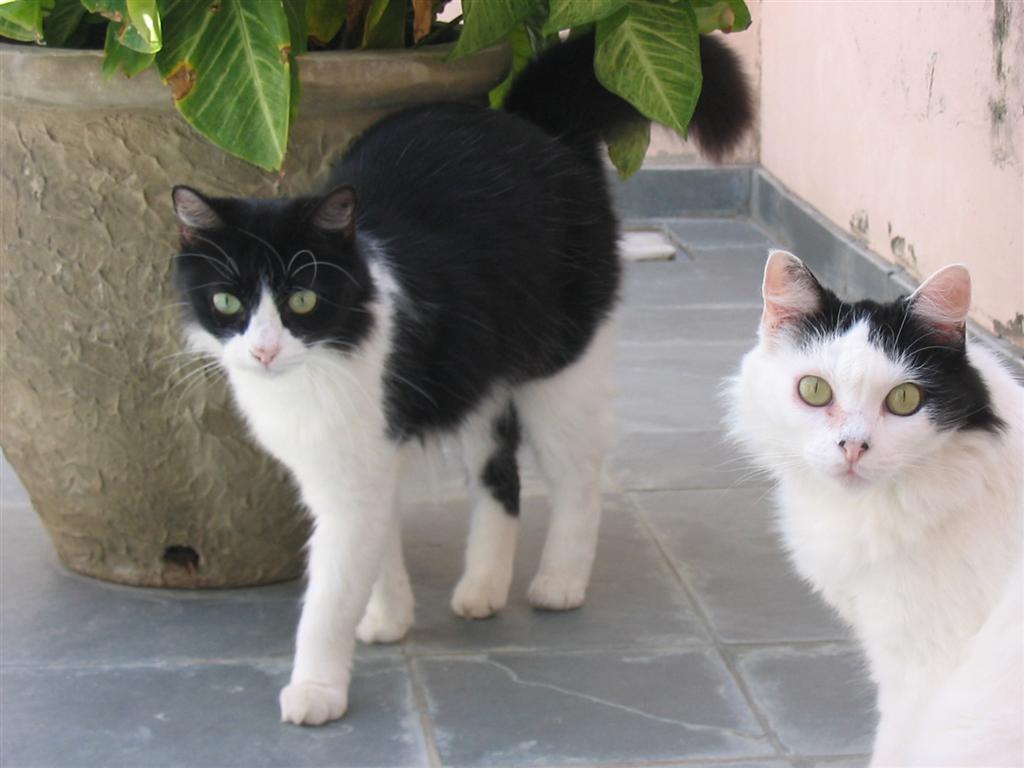 Bizo e Bolota