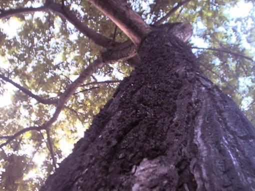 Árvores.